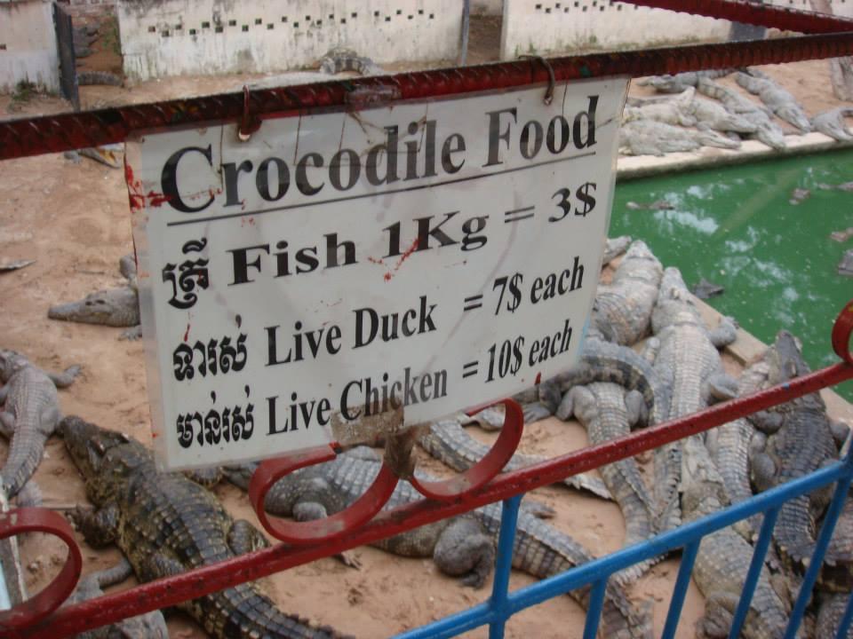 Feed the crocodiles