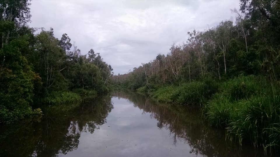 The crocodile infested water of Tanjung Puting