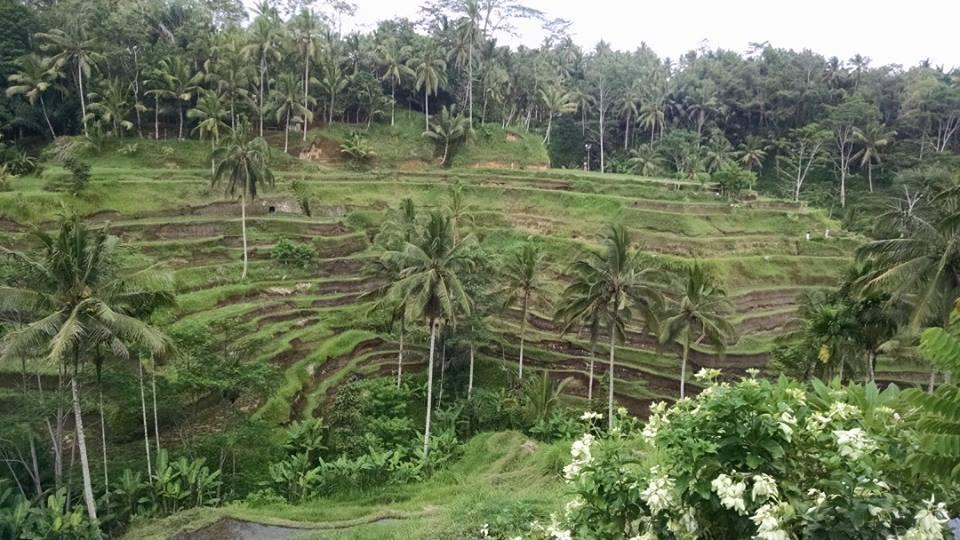 rice-terraces-ubud-bali
